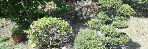 庭フキと.jpg