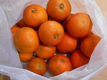 橙20個.JPG