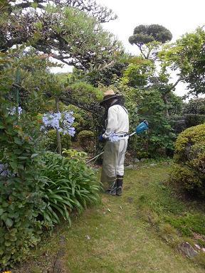 草刈り.JPG